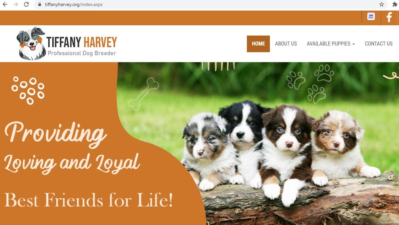 tiffany, harvey, dog, breeder, homepage, inspections, tiffany-harvey, dog-breeder, avery, tx, texas, aussie, australian, shepherd, mix, mini, miniature, aussiedoodles, puppy, mill, puppymill, usda, inspection, records, kennel